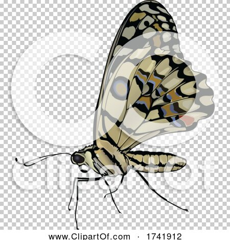 Transparent clip art background preview #COLLC1741912