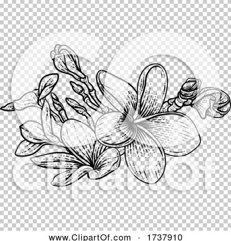 Transparent clip art background preview #COLLC1737910