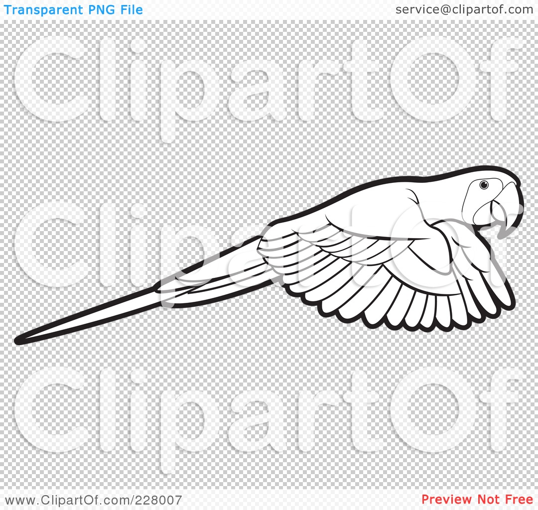 Flying Macaw Coloring Page Png File Has a