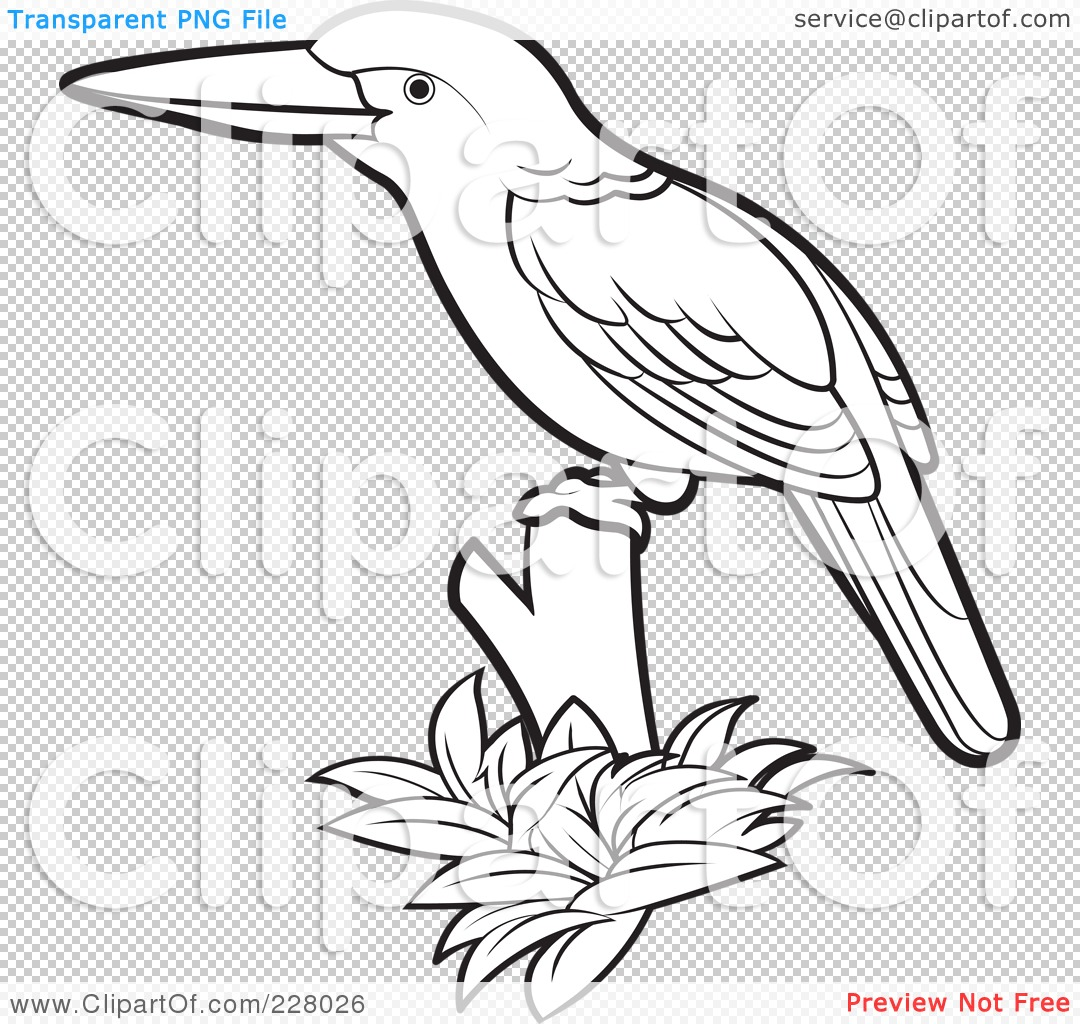 PNG File Has A Kookaburra Coloring Page