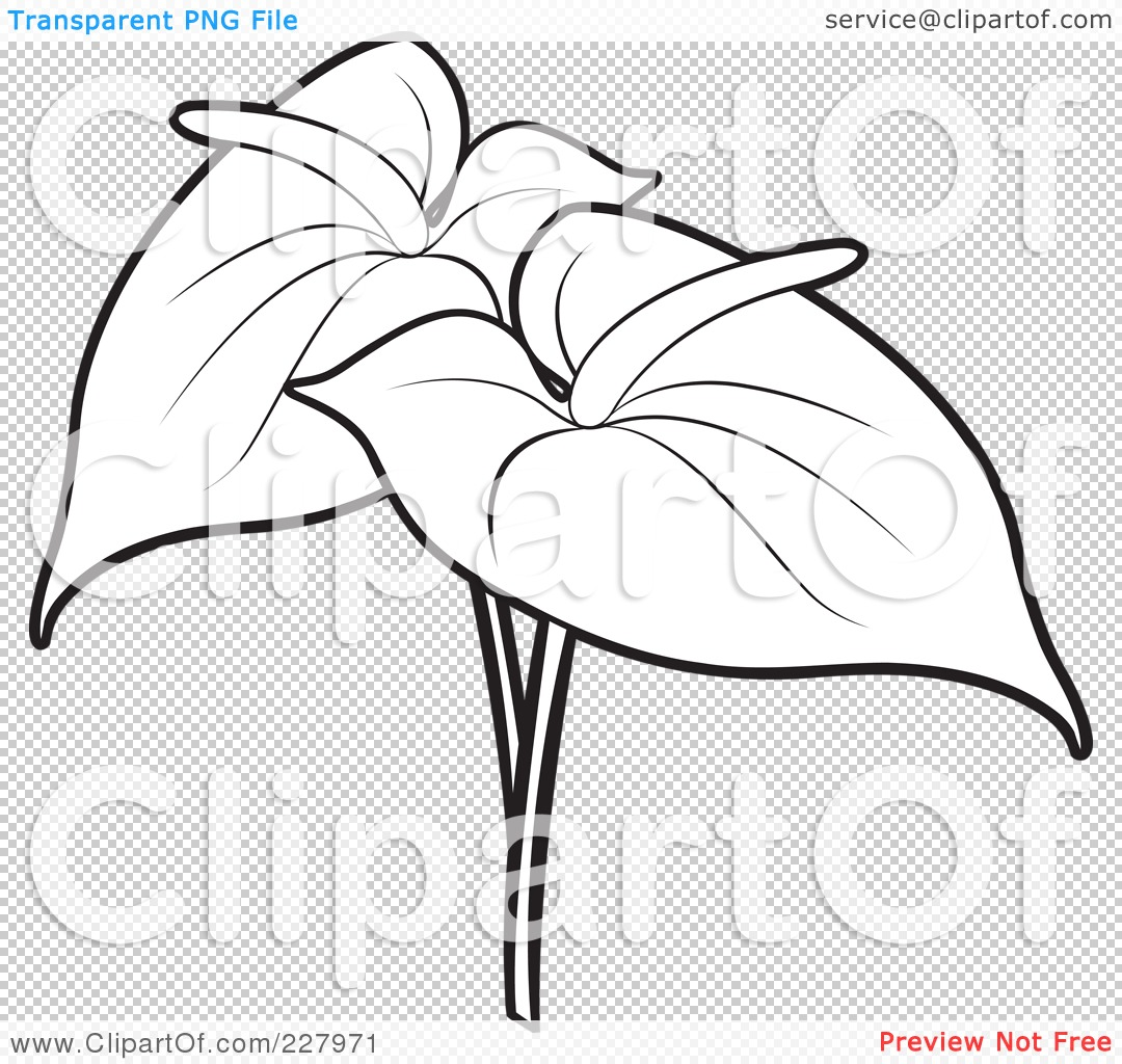 Anthurium Coloring Pages Of Flowers Sketch Coloring Page