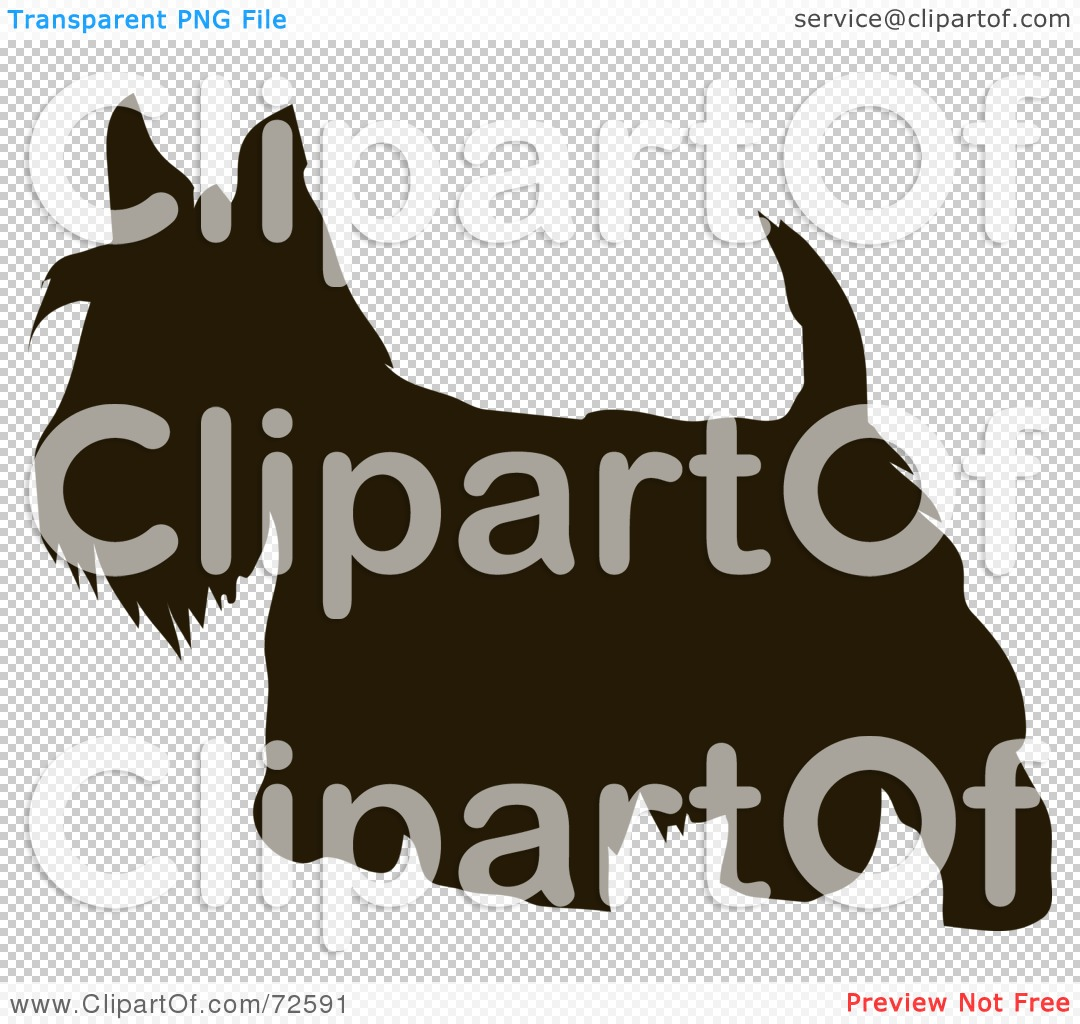 So cute puppies wallpaper 15897245 fanpop - Scottish Terrier Puppy Pictures