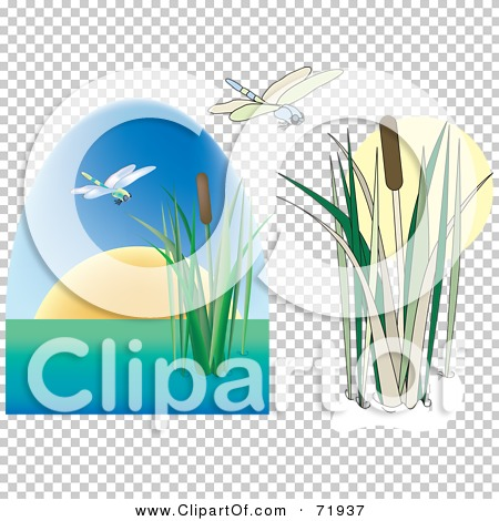 Transparent clip art background preview #COLLC71937