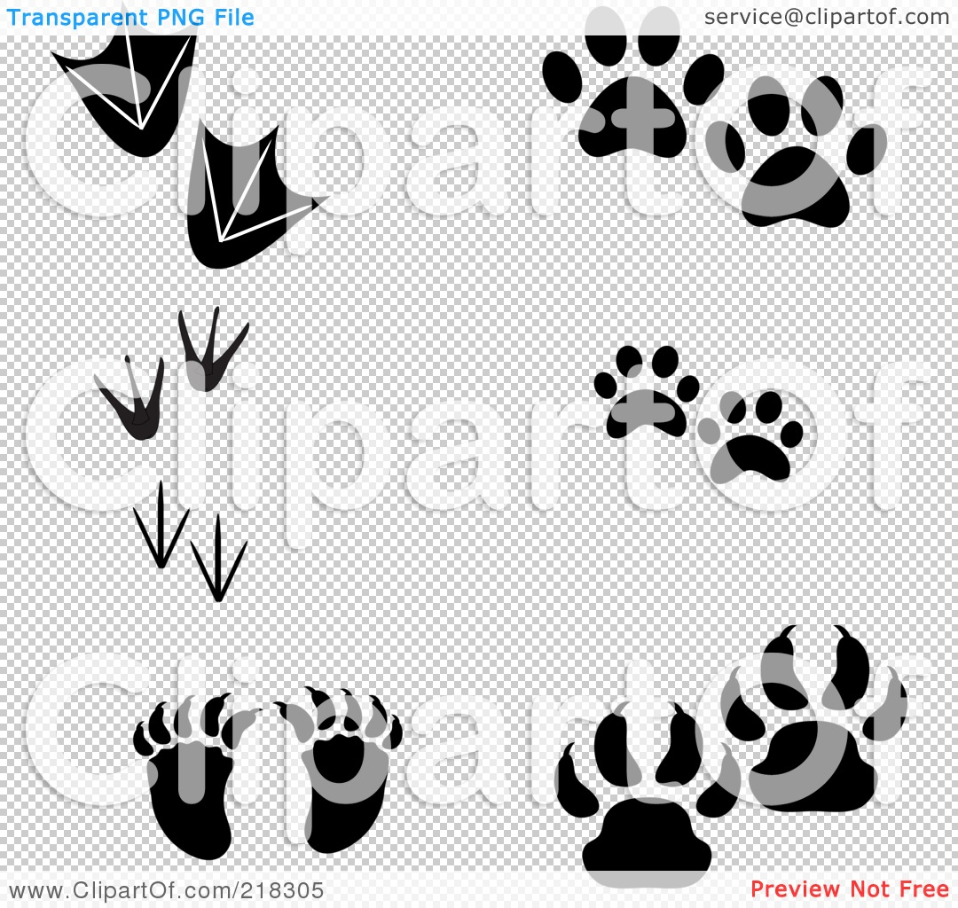 Displaying 20> Images For - Raccoon Paw Print Tattoo...