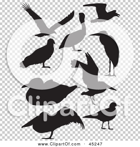 Transparent clip art background preview #COLLC45247