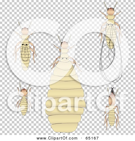 Transparent clip art background preview #COLLC65167