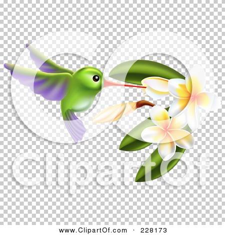 Transparent clip art background preview #COLLC228173