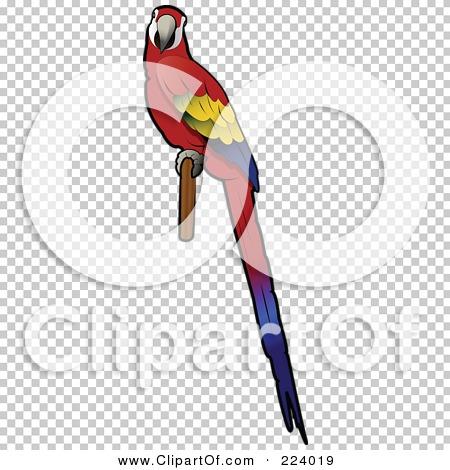 Transparent clip art background preview #COLLC224019