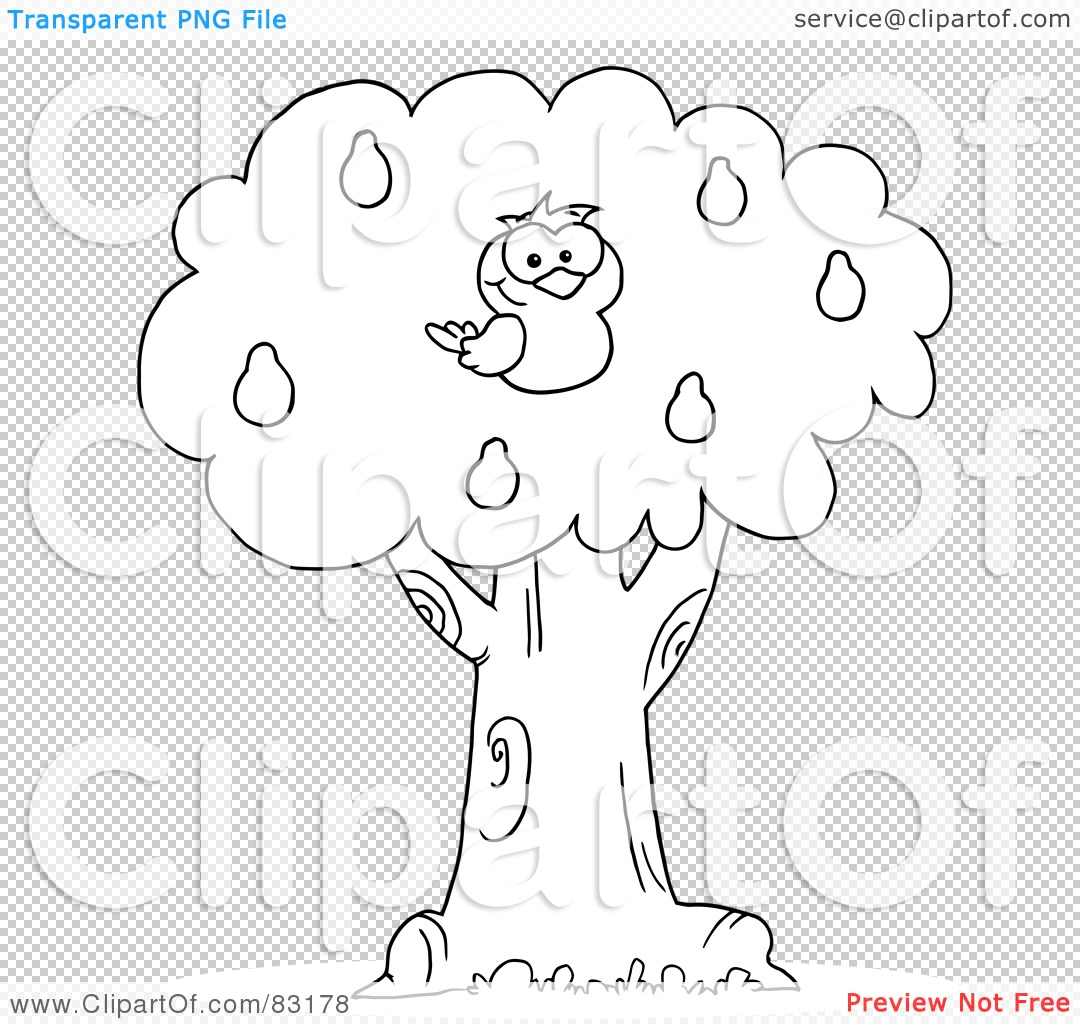 Displaying 13> Images For - Partridge In A Pear Tree Coloring Page...