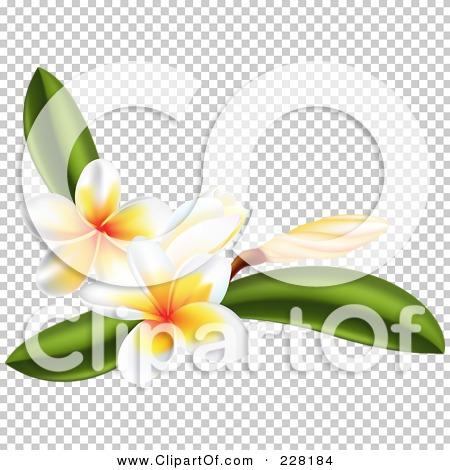 Transparent clip art background preview #COLLC228184