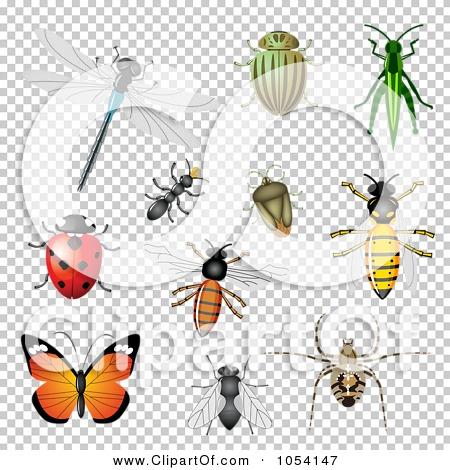 Transparent clip art background preview #COLLC1054147
