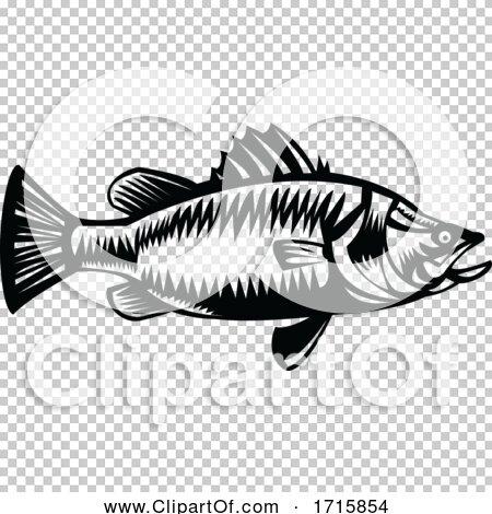 Transparent clip art background preview #COLLC1715854