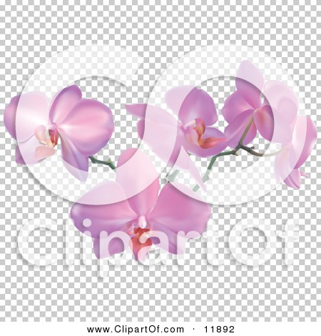 Transparent clip art background preview #COLLC11892