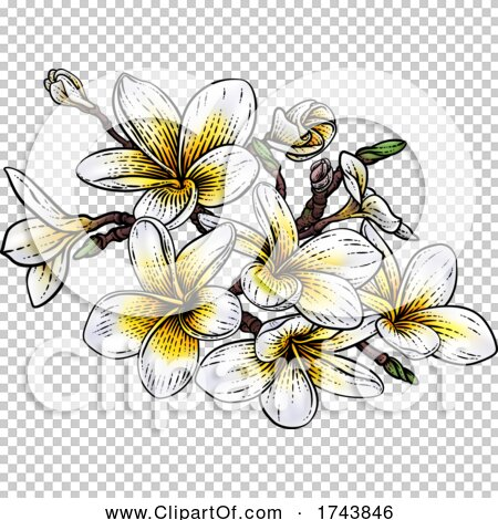 Transparent clip art background preview #COLLC1743846