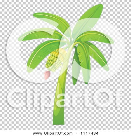 Vector Clipart Of A Tropical Banana Tree Royalty Free Graphic